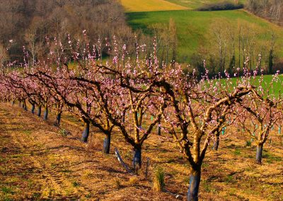 Puycornet | Arbres fruitiers
